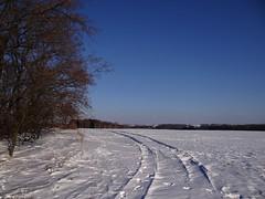 frozen blue... (JoannaRB2009) Tags: blue trees winter light shadow sun snow nature forest landscape woods path walk traces poland polska sunny lodz łódź dobieszków