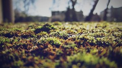 St Mary's moss