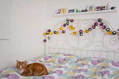Day Twenty Two / Year Two. (evilibby) Tags: cat lights bed shelf bedframe mybedroom hemma gingercat project365 barnabee cableandcotton