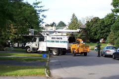 Trillium Tree Experts International single axle bucket truck with an Altec boom and a wood chipper trailer Ottawa, Ontario Canada 09102008 ©Ian A. McCord (ocrr4204) Tags: street ontario canada tree truck kodak ottawa boom camion vehicle pointandshoot altec trailer mccord nepean buckettruck woodchipper z740 singleaxle straighttruck ianmccord ianamccord trilliumtreeexperts woodchiptrailar