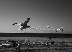 Coney Island (RomanK Photography) Tags: ocean seagulls streets beach brooklyn coneyisland streetphotography