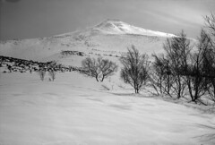 Hiking in April (threepinner) Tags: snow japan spring hokkaido tmax biei hokkaidou f35 105mm moskva5 northernjapan  industar24 mtbiei  mountainsnaps taisetsunationalpark