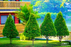 Pine Trees (Dice7 Photography) Tags: trees sea lake green nature grass pine philippines resort lakewood pinetrees mindanao greentrees zamboangadelsur zamboangapeninsula alindahaw alindahawlakeviewresort biswangan alindahawlakeview