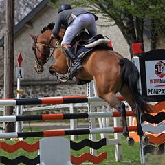 IMG_0120 - Pompadour (19) - Master Pro 2013 (Lumire-du-matin) Tags: horses caball