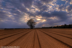 I Stand Alone (Explored) - Tree Ramsholt (Daveyboy_75) Tags: suffolk olympus explore dslr hdr lonelytree afternoonlight leadinglines ramsholt explored istandalone lonesometree olympusdslr e450 tractorlines olympuse450 olympuse450dslr bawdseypeninsular istandalonetreeramsholtsuffolk treeramsholt lonesometreeramsholt lonelytreeramsholt