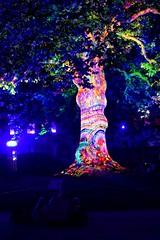 L'arbre de la Libert (Bluefab) Tags: libert arbre lumire cathdrale bayeux couleurs tableaux