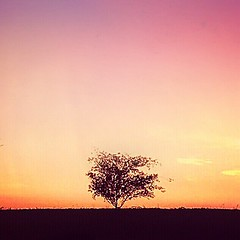 Only (johnnyp_80435) Tags: texas sunset sundown dusk tree lonely solitude pflugerville falconpointe
