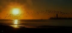 Birds in the Gold (beachpeepsrus) Tags: birds sky color gold shore flight beach water