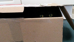 Pandora (neilalderney123) Tags: 2016neilhoward pandorda samsung phone box cat caturday