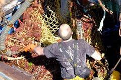 DSCF1488 (Jc Mercier) Tags: pche retourdepche fishermen marins cancale