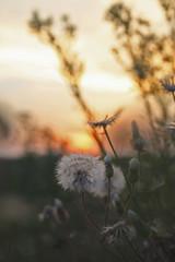 goodbye summer (N6ra) Tags: goodbye summer sundown flower macro village szomor