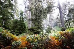 18 Interno del bosco (Ciak88) Tags: tofino nikon d5300