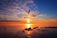 Flying Solo (ryand1975) Tags: sun lake ontario canada beach water birds clouds burlington nikon wildlife seagull bfg surise iamcanadian flickraward d5100 bestofblinkwinners