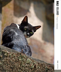 D3_Cool Cat (Ache_Hsieh) Tags: travel summer bali digital indonesia island olympus e3 swd 巴里島 zd 蜜月 印尼 1454mm2835 50200mm2835