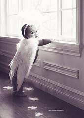 a chubby piece of heaven (Priscilla Christian) Tags: angel cherub freedomofthepress naturallighting babyphotography presscoveragephotography