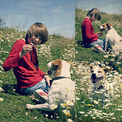 RIP Olly Dog 14/2/13 (livin the dream*) Tags: pet daisies friend companion wfc welshflickrcymru ollydog