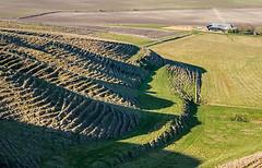 Cultivation terraces below Morgan's Hill - LR4-2176780-web (David Norfolk) Tags: olympus ep3 40150mm fieldcontours categorylandscapedowns locationukwiltshiremorganshill