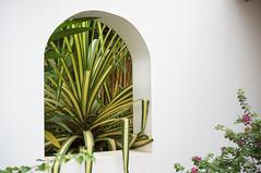 29 December, 14.44 (Ti.mo) Tags: plant window architecture iso100 hotel panama centralamerica 52mm pedasi boutiquehotel 0ev  villacamilla secatf28 e35mmf18oss