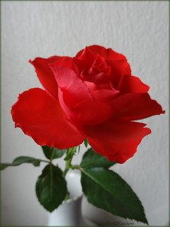 Allen einen lieben Rosengruß für einen guten Start in die neue Woche