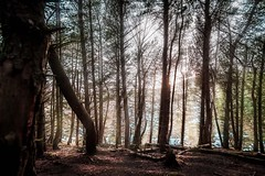 Break threw (Now Now Ry) Tags: trees light brown sun leaves woodland dark lights woods glare february