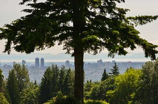 Skyline Shade Tree