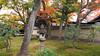 黄梅院 Ōbai-in (ɑlɑstɑr ó clɑonɑ́ın) Tags: autumn japan temple maple kyoto momiji 京都 日本 紅葉 japon giappone japón daitokuji 大徳寺 oubaiin 黄梅院 obaiin kyo¯to2012 kyōto2012 ōbaiin