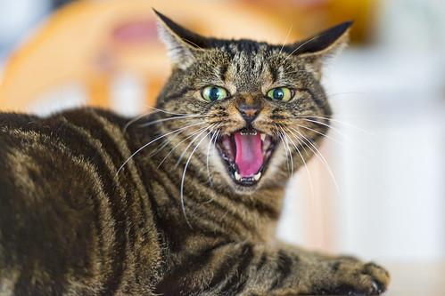 Angry Pflümli