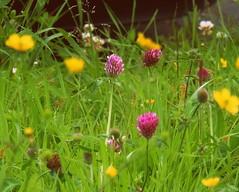 "Fleur...For my sweet friend, Didi (mikazu001 away) Tags: holland hgv ©allrightsreserved youmademyday 攝影發燒友b fugitivemoment fleursetpaysages ☼♥givemefive♥☼ hennysgardens lovelymotherearth"" floralaromas johancarmen ░ᕼᗩᖰᕈᎩᙡᙓᙓḱᗴﬡᖱ░"