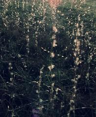 pearly (LauraSorrells) Tags: light favorite sun love field rural one soft poetry poem treasure god kentucky empty meadow illumination grace vision bucolic lightplay gethsemani rsthomas pearlofgreatprice