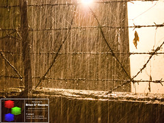 A Nightly Downpour - Heaviest Of The Season's First (Brian D' Rozario) Tags: brian19869 briandrozario bangladesh dhaka rain rainy midnight urban barbed wire nikon d7000 d7k 55200mmf456 55200mm splash splashes weather nature natural 522013week12 giveusyourbestshot