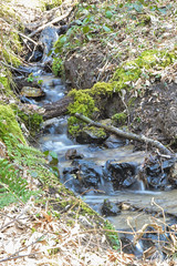 the stream (Ch.Neis) Tags: france tree nature grass birds creek reflex nikon stream natur bach 23 1855mm nikkor arbre baum creuse vogel oiseaux herbe limousin dx ruisseau d5200 photographedandcopyrightbychristophneis stpierrecherignat