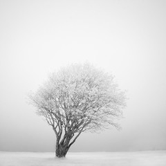 The birds tree (c e d e r) Tags: bw tree fog seaside sweden malmoe infrared malm