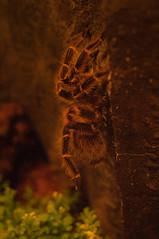 IMGP3247.jpg (MEATY IDEAS) Tags: fish night vancouver aquarium december pentax around vancouveraquarium k7 2011 pentaxk7