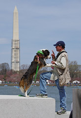 Dog and Man in Washington (Mondmann) Tags: usa dog pet man america washingtondc unitedstates washingtonmonument jeffersonmemorial tidalbasin mondmann pentaxk5