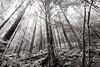 the light pours out of me (bluechameleon) Tags: trees light mist nature forest moss rainforest rocks branches foliage northvancouver ferns lynnvalley explored bluechameleon artlibre sharonwish artlibres bluechameleonphotography