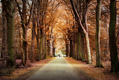 on a sunday afternoon... (Zino2009 (bob van den berg)) Tags: autumn trees people sorry forest photoshop walking path herfst archive lane sion klooster deventer pswork raalte bobvandenberg eikelhof theacademytreealley zino2009