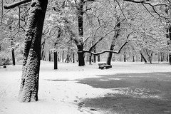 Balta.2 (Vygintas R.) Tags: park trees winter bw white film monochrome photoshop bench iso200 december rangefinder 35mmfilm 2009 lithuania vilnius lietuva fujisuperia200 bessar2a nikoncoolscan5000  sereikikiparkas vygintasrainskas 294210