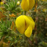Flower, Alicante