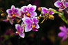 5ª Flower, sempre + orquídeas... (GFerreiraJr ®) Tags: flowers brazil flores flower brasil nikon orchids flor orquídeas nationalgeographic d90 micámarayyo nikond90 flickraward nikonflickraward panoramafotográfico touraroundtheworld flickrunitedaward hennysgardens brasilemimagens gferreirajr 40ªexposiçãodefloresdesantoandré