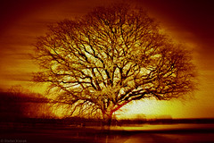 An old oak tree (radonracer) Tags: oak digiart eiche paintit radonart