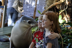 Sealed with a kiss (Roving I) Tags: tourism children wildlife kisses australia nsw newsouthwales attractions brothersandsisters furseals coffscoast dolphinmarinemagic