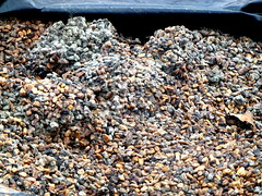 Polluted Cobble Stones - Cte d'Ivoire (UNEP Disasters & Conflicts) Tags: environment climatechange ctedivoire unep environmentalassessment unitednationsenvironmentprogramme unepmission uneppostconflictenvironmentalassessment environmentalexperts