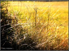 DORADO OTOO ! /  GOLDEN AUTUMN ! (Clic - Fany Romano 1.250.000, view thanks Gracias) Tags: park parque autumn trees light sky naturaleza flores green hoja luz sol canon natura amarillo giallo cielo otoo colori luce reflejos dorado tierra petalos arbusto excellentsflowers exquisiteflowers blinkagain bestofblinkwinners clic2011 blinksuperstars rememberthatmomentlevel1 rememberthatmomentlevel2 fanyromano