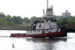PEGASUS in New York, USA. June, 2016 (Tom Turner - SeaTeamImages / AirTeamImages) Tags: vessel tug tugboat pegasus spot spotting water waterway seagull channel arthurkill tomturner statenisland newjersey gardenstate newyork bigapple unitedstates usa nyc marine maritime pony port harbor harbour transport transportation
