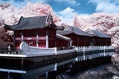 NIR #01 720 nm (Asian Village, Sentosa) (yewyuee) Tags: asian asianvillage cherryblossom chinese infrared ir landscape nir oriental reflection sakura singapore surreal