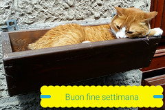 Buon fine Settimana - Happy weekend, Friends! (collage42 Pia-Vittoria//OFF/OFF/OFF) Tags: cats gatti animali animals