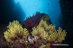 Medas island (Marcello Di Francesco) Tags: estartit medas underwater underwaterphotography amp areamarinaprotetta fixneo fotosub isolemedas lesilles mediterraneansea mediterraneo natura nauticam spagna spain wide
