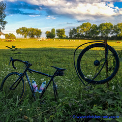 100 Days of Summer # 85 - Flat! (elviskennedy) Tags: 6s 6splus 100daysofsummer air animals athlete barbwire bicycle bicycling bike biking blue clouds colnago cyclist ditch elvis elviskennedy ewe farm farmer fast fence field fix flat flattire flock frame gear grass green hdr herd highdynamicrange innertube iphone kennedy mainteance mequon milkweed outdoor outside pasture pump puncture race racing ragweed rain ram ride riding road roadside rural rustic scenic seat sheep sheperd sky sport sports thistle tire trees trouble tyre wheel wheels wi wisconsin wool wwwelviskennedycom