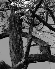Santa elena - Antioquia (JicarsanPS) Tags: tranquilidad soledad desvelo firmeza desespero aungistia nostalgia fortaleza natural jardn sueos salud futuro sonre ama cree confrontacin recuerdo duro dificultad esperanza rbol rboletes tree ling june milk texture textual textura limp ahora ya rightnow now limk husband used usado largo