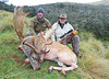 New Zealand Red Stag Hunting - Christchurch 30